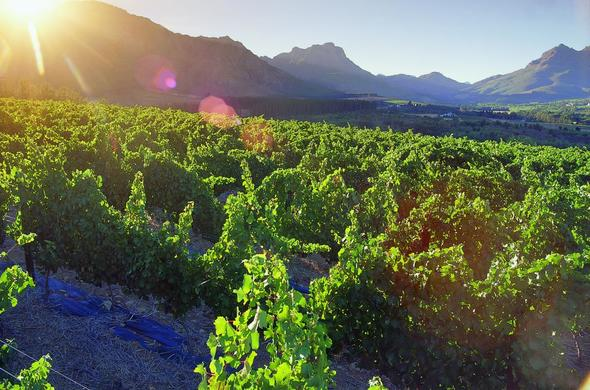 Cape Winelands Full Day Tour.