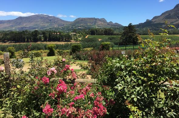 View of the Constantia Winelands from Chart Rose Farm.