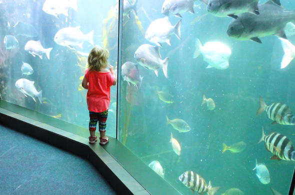 Child having fun at the Two Oceans Aquarium at the V&A Waterfront.